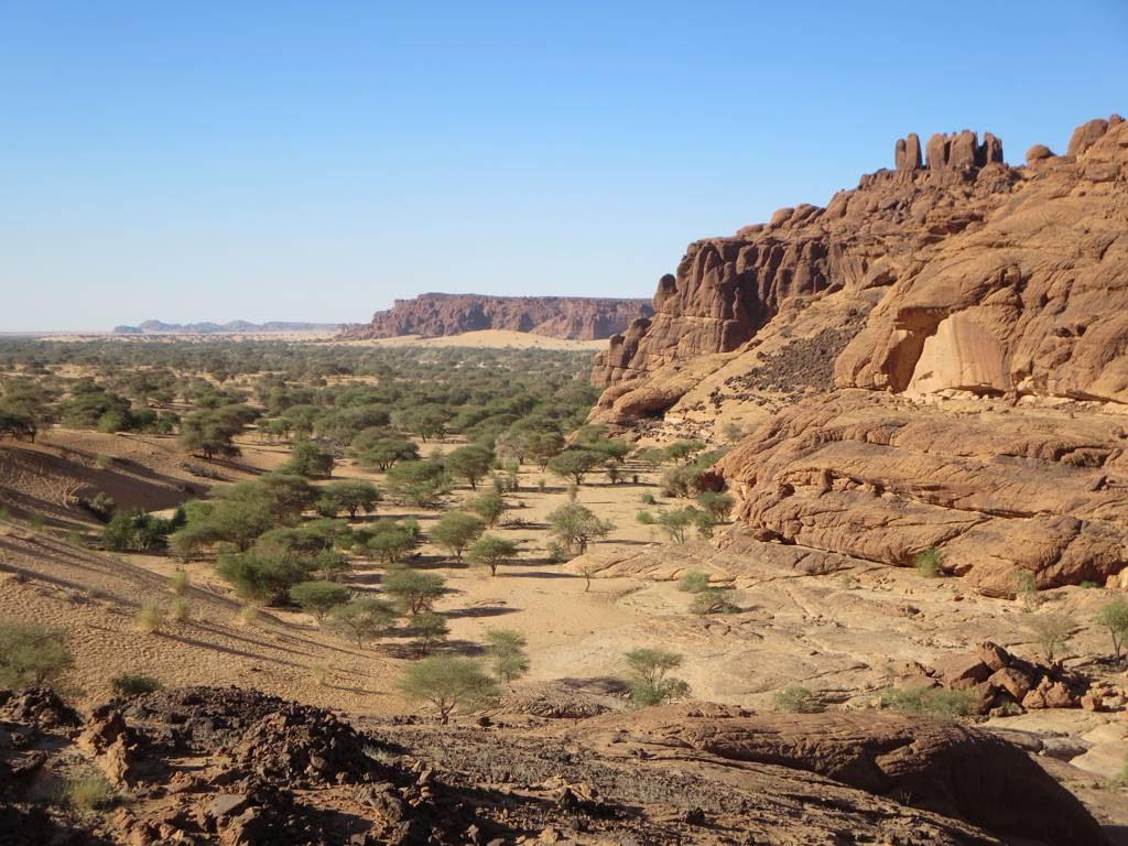 Ακακίες στα σύνορα Σαχάρας και Σαχέλ