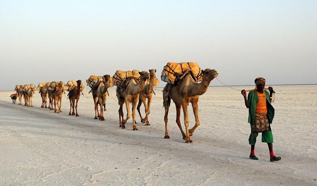 καραβάνι καμήλες